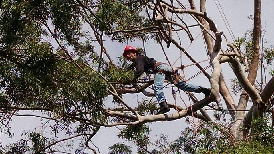 Moreno's Five Start Tree Service Los Angeles